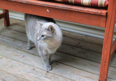 cat-4342757-1500x1060
